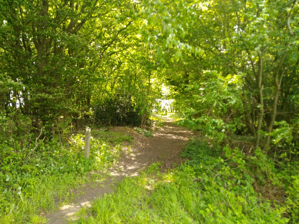 Green green wood